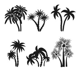 Different palm trees set silhouettes isolated on white background. Black tropical plants icons vector illustration. Rainforest jungle plants. Summer beach resort decoration