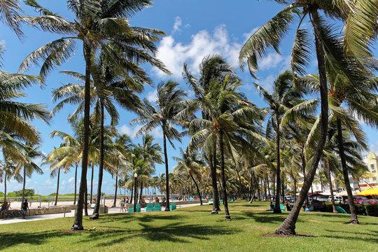 Miami beach, Florida - July 16, 2016: Miami South Beach park with palms