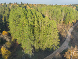 Autumn forest from a bird's-eye view