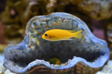 Рыбка плывёт под водой.