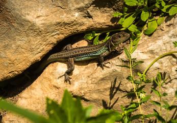 Lizard on ruins of ancient Greek tomb