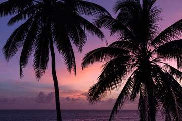 Palm tree silhuettes at sunrise