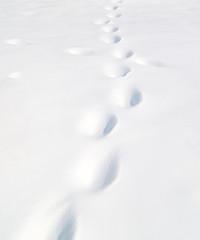Papiers peints Antarctique footprints in the snow