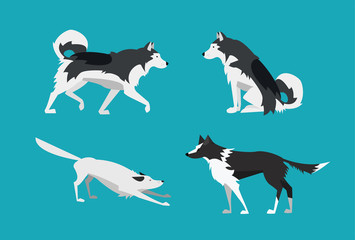 Vector Illustration. Set of Dogs in Flat Design. Alaskan Malamute and Border Collie.