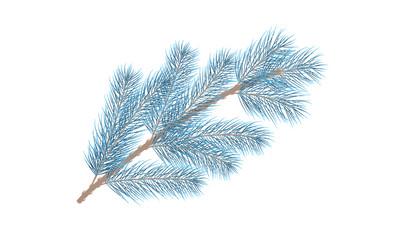 Blue pine branch. Fir tree branch. Vector