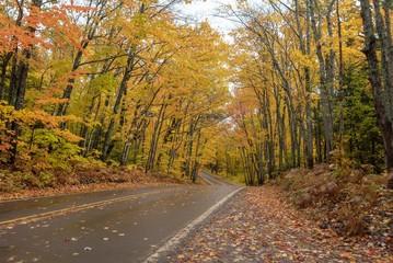 Beautiful golden Autumn trees along a road in Michigan