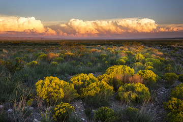 Printed kitchen splashbacks Gray traffic The Desert comes to life with evening light in New Mexico