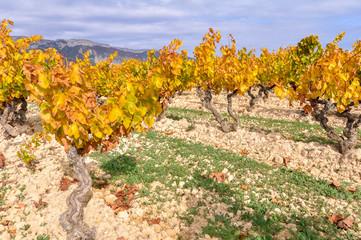 Wall Mural - Viñedos en otoño, Rioja Alavesa, España