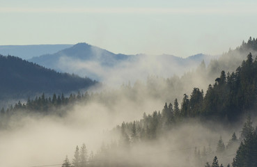 Foto op Canvas Ochtendstond met mist Larch trees are the star of the alpine forest in Washington State