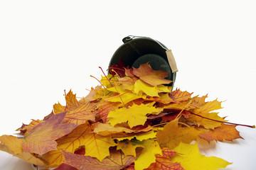 herbstlich gefärbte Blätter liegen vor einem kleinen Eimer