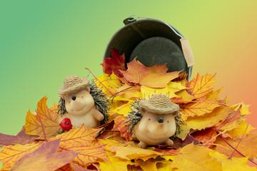 niedliches Igelpaar in einen Blätterhaufen mit farbigen Hintergrund