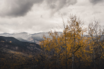 Yellow aspen trees with mountains in the background during fall.