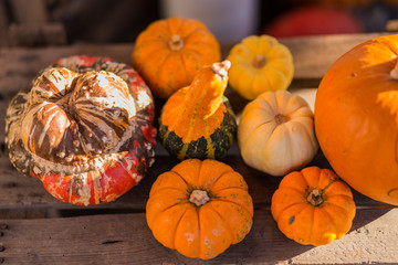 a lot of colorful pumpkins on the farmer market