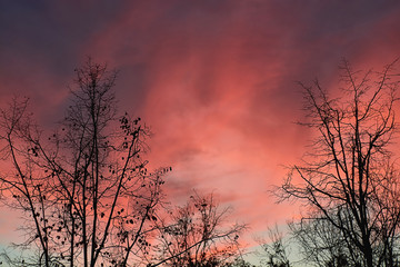 Beautiful autumn pink sunset. Silhouettes of treetops. Landscape.