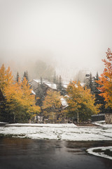 Colorful, autumn trees at Beaver Creek, Colorado during a fall snow storm.