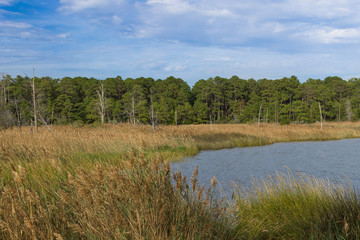 The wetlands of southern Maryland along the Chesapeake Bay