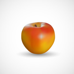 Realistic apple on a white background, vector, illustration, eps file