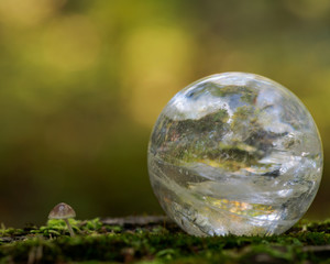 Lemurian Clear Quartz Sphere crystal magical orb on moss, bryophyta and bark, rhytidome in forest preserve.