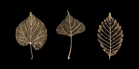 Set of gold skeleton leaves on black background