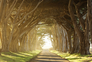 long tree tunnel through foggy trees near San Francisco