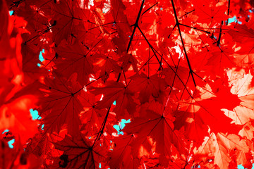 autumn red leaves textured background sunny light