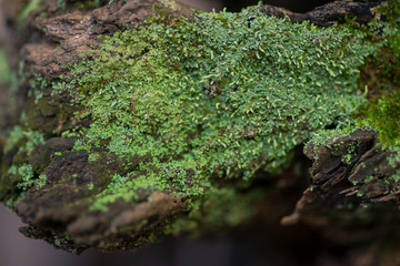 Green moss on tree bark in forest preserve during indian summer
