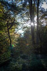 Herbst Wald Sonnenstrahlen
