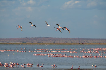 Garden Poster Flamingo flamingo group in the lake