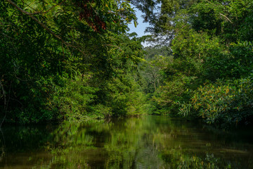 Amazing scenic view Tropical forest with jungle river on background