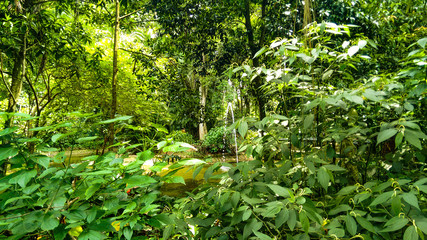 Botanical garden of Santos/SP