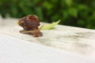 big snail macro view