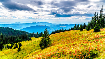 Hiking through the alpine meadows in fall colors on Tod Mountain near the village of Sun Peaks in the Shuswap Highlands of British Columbia, Canada  Wall mural