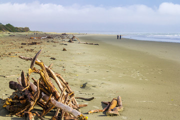 Pile of Dried Woods at Tahunanui Beach Nelson, South Island; Landscape Scenery New Zealand
