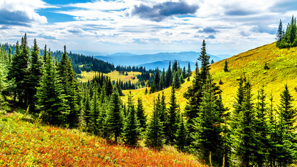 Hiking through the alpine meadows in fall colors on Tod Mountain near the village of Sun Peaks in the Shuswap Highlands of British Columbia, Canada
