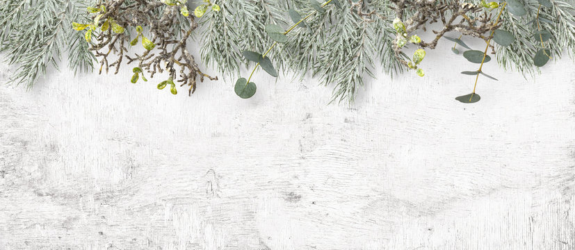 winter or Christmas themed banner / background with a border of green fir tree twigs, frosted greenery and eucalyptus leaves on a white wooden board, copyspace for your text, flat lay / top view