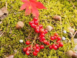 森の中のドングリ 秋イメージ