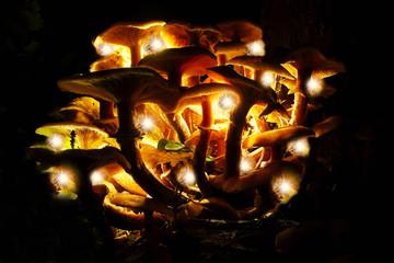 the magic mushrooms
