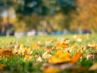 Low angle fall leaves on the lawn object background