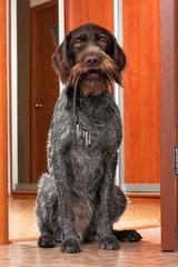 dog deliver dog collar