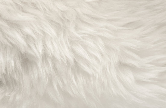 White animal wool texture background, beige natural sheep wool, close-up texture of  plush fluffy fur