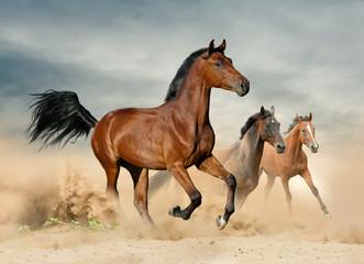 Herd of wild beautiful horses