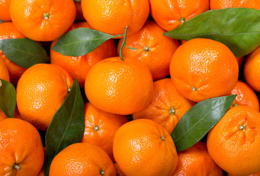 Fresh mandarin oranges fruit or tangerines with leaves