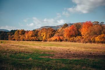 Beautiful orange autumn meadow and trees