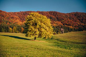 Oak tree in autumn landscape