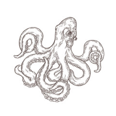 Hand drawn octopus isolated on white background. Vector engraved illustration.
