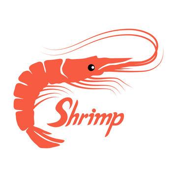shrimp isolated on white background, hand drawn seafood, vector prawns shrimp, shrimp logo, vector artwork