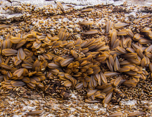 Termites life