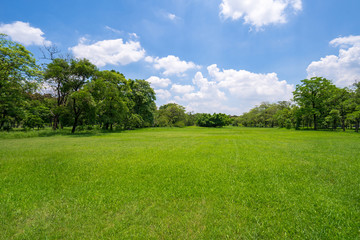 Grass and green trees in beautiful park under the blue sky Wall mural
