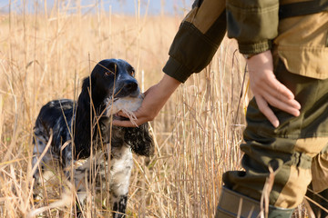 Successful hunt, female hunting dog and wounded bird are in a thickets of a high grass. The caucasian hunter is wearing khaki suit and the russian spaniel with quail in his mouth are in rural. Wall mural
