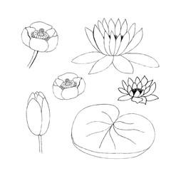 illustration of lotus bud and leaf isolated